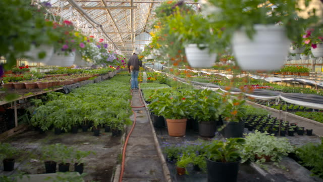 Farmer Spraying Water On Plants In Greenhouse