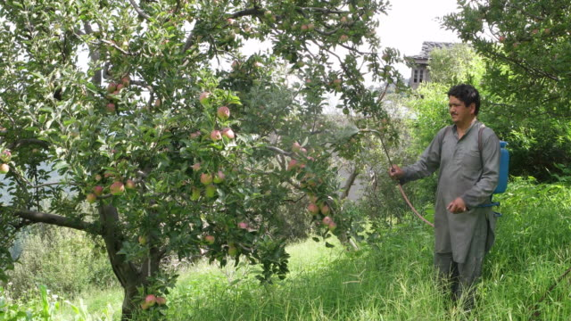 farmer sprays insecticide pesticide on his farm - 吹きかける点の映像素材/bロール