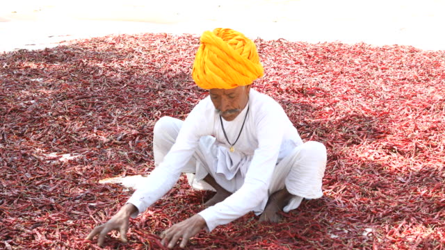 farmer spreading red chili peppers to dry - moustache stock videos & royalty-free footage