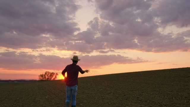 farmer spreading,sowing seeds in idyllic,rural plowed field at sunset,slow motion - sowing stock videos & royalty-free footage