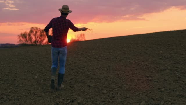 farmer spreading,sowing seeds in idyllic,rural plowed field at sunset,slow motion - lavoratore agricolo video stock e b–roll