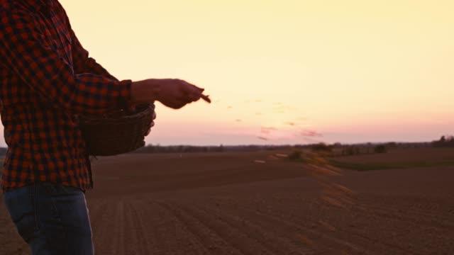 vidéos et rushes de agriculteur répandre, semer des graines dans le champ labouré idyllique, rural au coucher du soleil, ralentir le mouvement - tenir