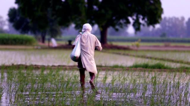 Boer verspreidt meststoffen in het veld van padie planten