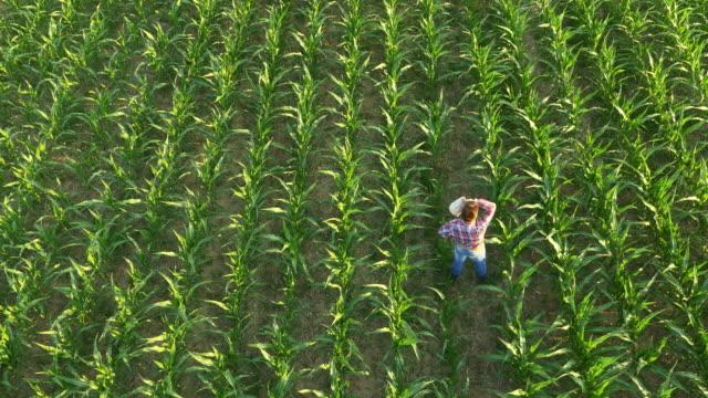 vídeos de stock e filmes b-roll de antena agricultor de pé entre plantas de milho jovem - aviation fatigue