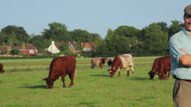 MS PAN Farmer standing in field, cows grazing in background / St Albans, Hertfordshire, United Kingdom