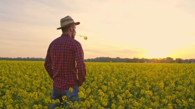 vídeos y material grabado en eventos de stock de granjero de pie en tranquilo, idílico, canola rural campo al atardecer, el tiempo real - camisa a cuadros