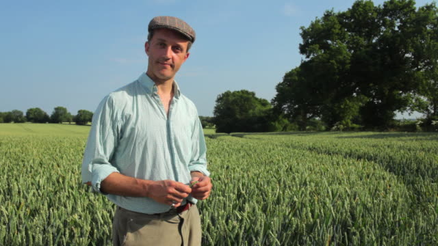 ms farmer standing in wheat field, smiling / st albans, hertfordshire, united kingdom - farmer stock videos & royalty-free footage