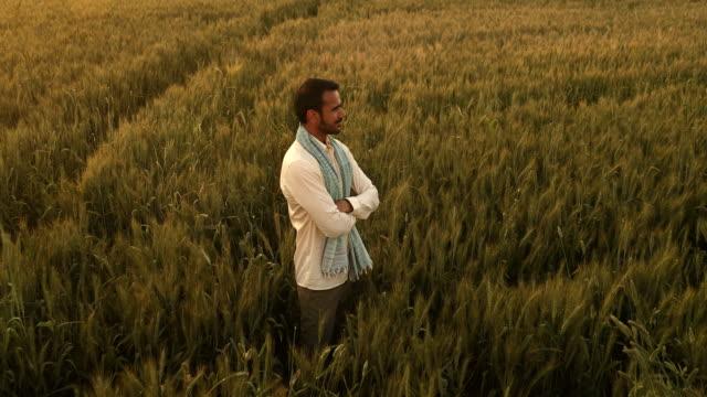 "stockvideo's en b-roll-footage met ""ws pov farmer standing in wheat field with arms crossed / samalkha, haryana, india "" - armen over elkaar"