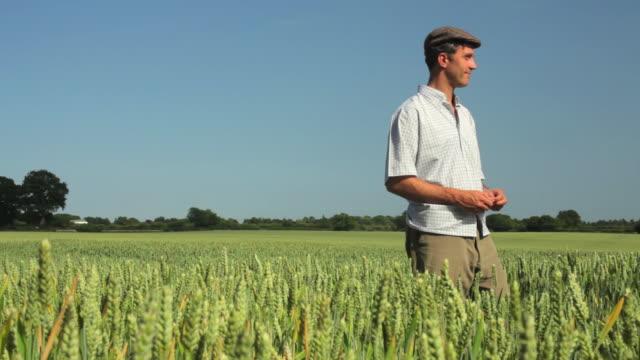 WS Farmer standing in wheat filed / St Albans, Hertfordshire, United Kingdom