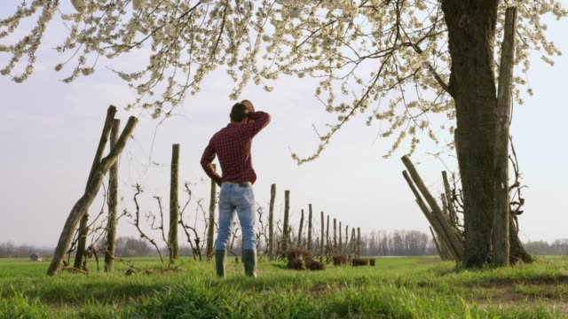 farmer standing under tree in idyllic,rural field,real time - forehead stock videos & royalty-free footage