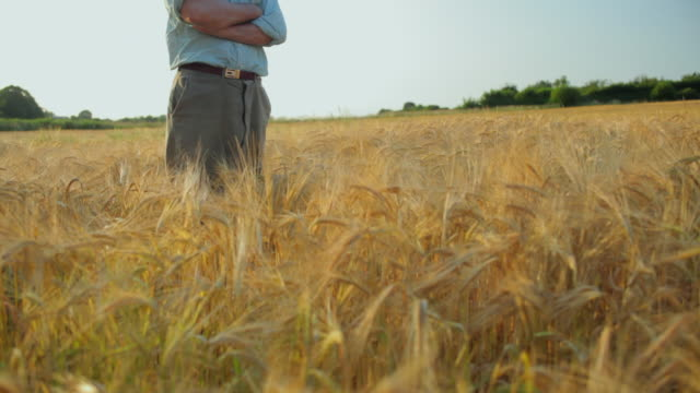 WS TU Farmer standing with arms crossed in barley field / St Albans, Hertfordshire, United Kingdom