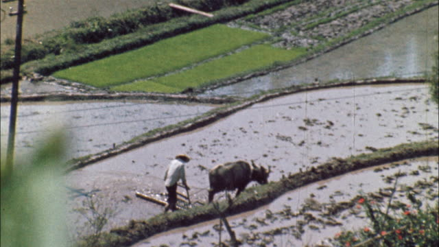 a farmer steers a plow pulled by a water buffalo in rice paddy; a farmer carries buckets on yoke; a water wheel spins. - 1967 stock videos and b-roll footage