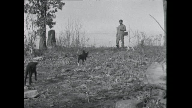 farmer stops and calls to his dogs - 1961 stock videos & royalty-free footage