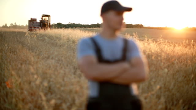 farmer supervises harvest - lavoratore agricolo video stock e b–roll