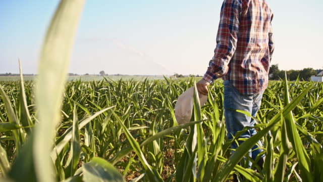 slo mo farmer taking off his cap in the field - plaid shirt stock videos & royalty-free footage