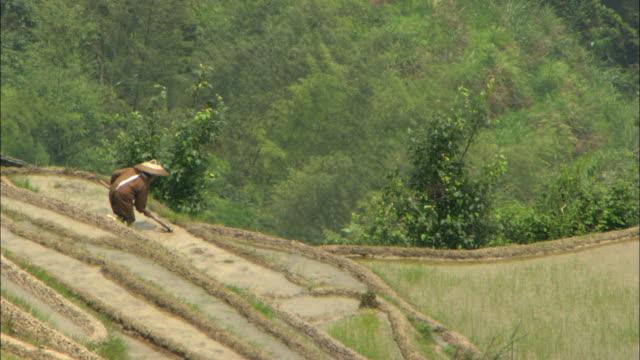 ws farmer tending hillside rice crop, guelin guilin, guangxi zhuang autonomous region, china - guangxi zhuang autonomous region china stock videos & royalty-free footage
