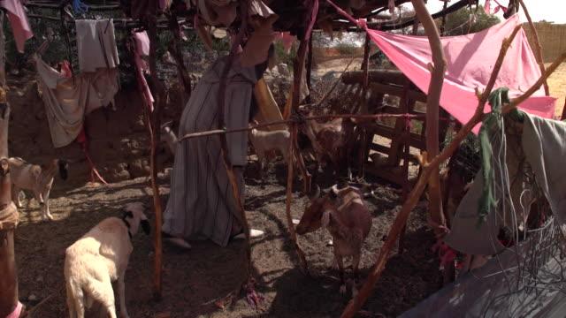 a farmer tending to his goat herd on his farm in the sahel region of mali - trockenlandschaft stock-videos und b-roll-filmmaterial