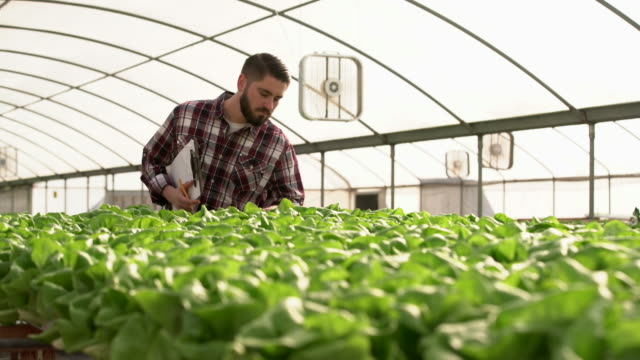 cu farmer tending to his vegetables in a greenhouse - checked pattern stock videos & royalty-free footage