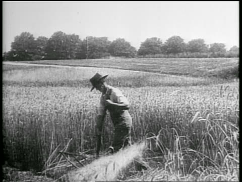 b/w 1928 farmer threshing wheat with scythe / oklahoma / newsreel - oklahoma stock videos & royalty-free footage