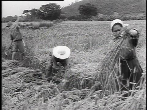 farmer throwing seed / farmers harvesting hay / farmer raking rice paddy - 1947 stock videos & royalty-free footage