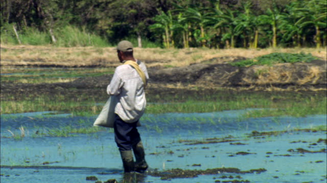 MS Farmer throwing seeds in wetlands / Guanacaste, Costa Rica