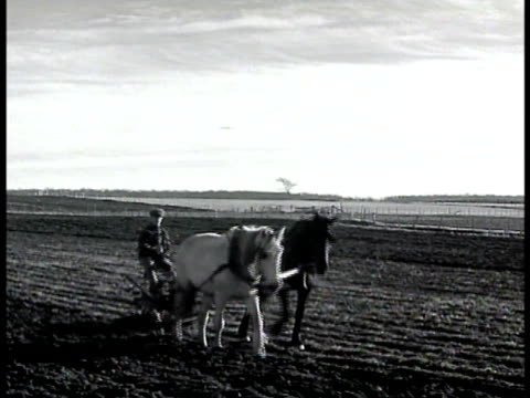 Farmer tilling plot of land sitting on plow drawn by two horses
