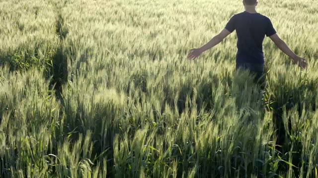 HD スローモーション: 農家タッチの小麦-ストック動画