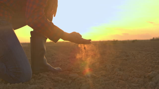 vídeos de stock e filmes b-roll de ms farmer touching,examining dirt in rural plowed field at sunset - solo