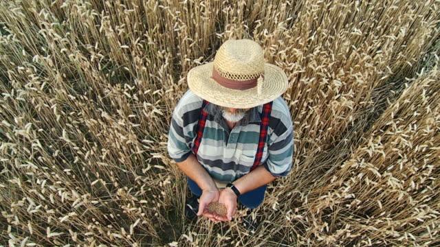 vidéos et rushes de hd ralenti: agriculteur trowing grains dans l'air - satisfaction
