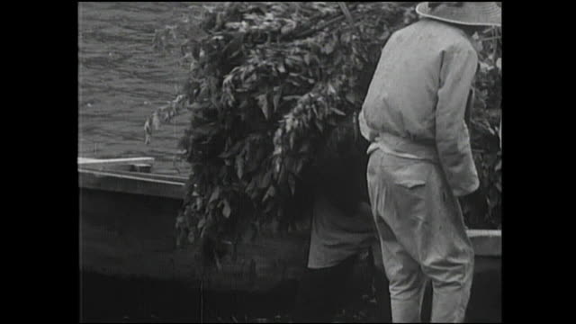 Farmer unload bundles of mulberry leaves on the shore of Lake Saiko.