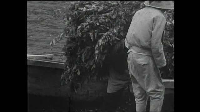 vidéos et rushes de farmer unload bundles of mulberry leaves on the shore of lake saiko. - après guerre