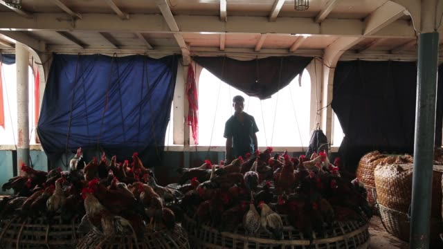 Farmer unloaded hen on launch to sell them in Dhaka in Coastal area in Bangladesh on August 14 2017 Bangladesh a country which is ranked as one of...