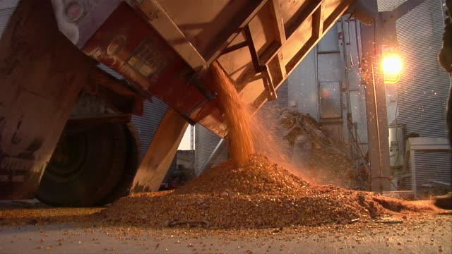 MS farmer unloading truck full of corn/ Manchester, Michigan