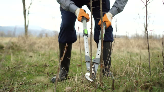 landwirt verwenden beschnitt sheras - obstbaum stock-videos und b-roll-filmmaterial