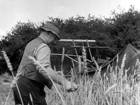 a farmer uses a scythe to cut down corn - scythe stock videos and b-roll footage