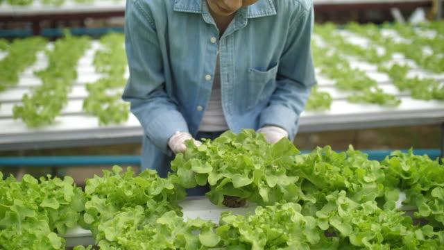 vídeos de stock, filmes e b-roll de farmer usa um tablet em - 10 seconds or greater