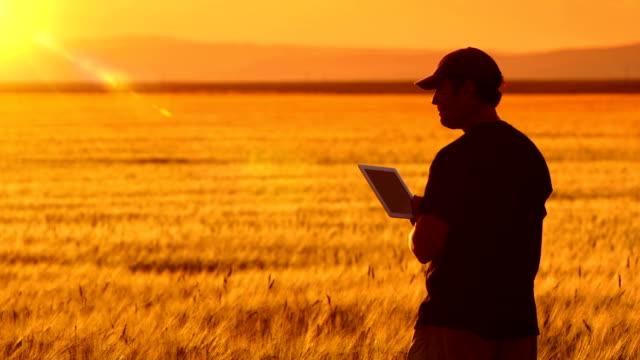 Farmer uses a tablet while looking at his crops.