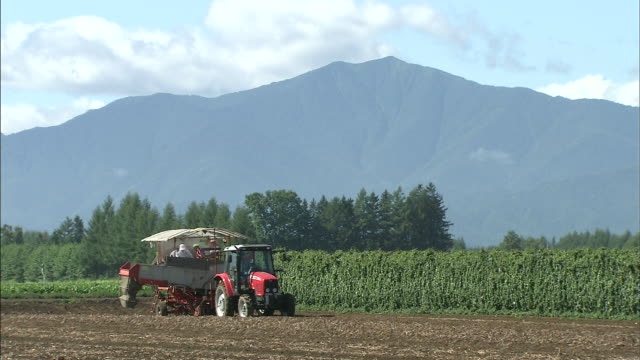 A farmer uses a tractor to harvest potatoes.