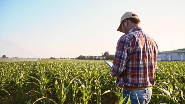 vídeos de stock, filmes e b-roll de agricultor usando um tablet no campo de milho - milho
