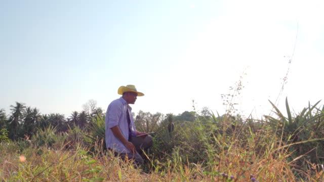農家は、デジタルを使用してタブレット パイナップル分野での品質検査 - 農学者点の映像素材/bロール