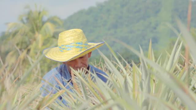 パイナップル畑でデジタルタブレット品質検査を使用している農家 - 農学者点の映像素材/bロール
