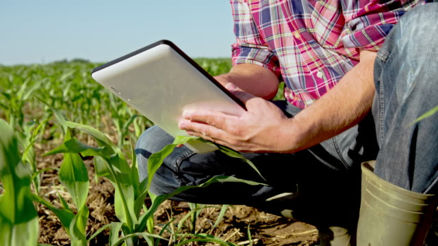 MS DS Farmer Using A Digital Tablet