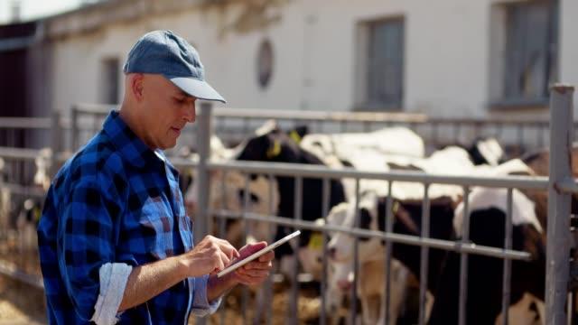 Farmer using digital tablet at farm barn, stable, livestock, cow.