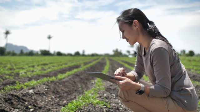 vidéos et rushes de fermier utilisant la tablette numérique, fermier examinant des usines utilisant la tablette numérique - scène rurale