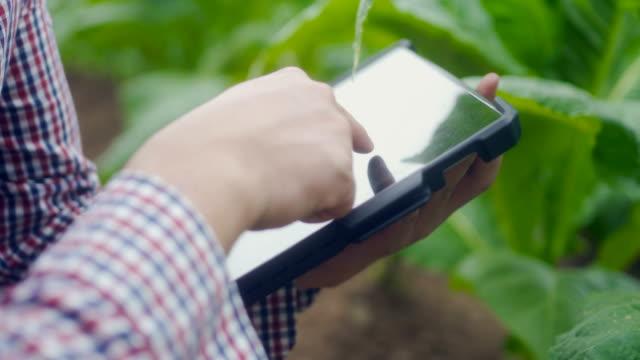 landwirt mit digitaltablet in farm - berührungsbildschirm stock-videos und b-roll-filmmaterial