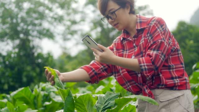 farmer using digital tablet in farm - biotechnology stock videos & royalty-free footage