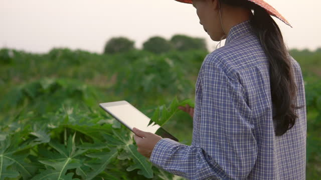 farmer using digital tablet in farm - thai ethnicity stock videos & royalty-free footage