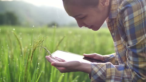 farmer using digital tablet in her farm - button down shirt stock videos & royalty-free footage