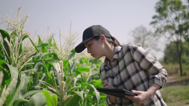 agricoltore che utilizza tablet digitale in smart farm - young men video stock e b–roll
