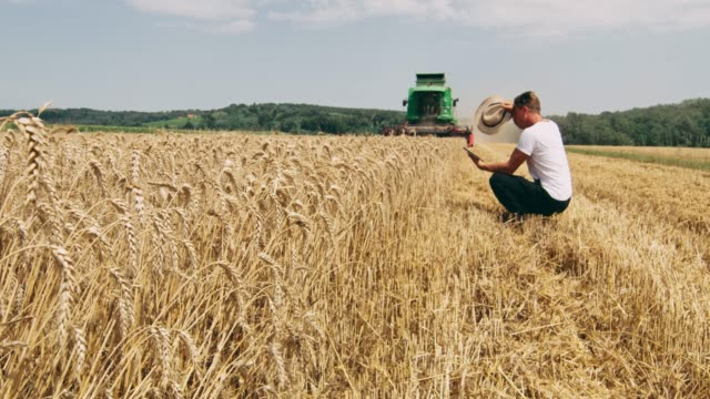 farmer using digital tablet in sunny,rural wheat field,slow motion - tractor stock videos & royalty-free footage